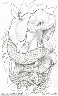 Like the symbolism. Lots of snake and apple tattoos have an angry looking snake. for men ✌ Like the symbolism. Lots of snake and apple tattoos have an angry looking snake. for men ✌ Tattoo Sketches, Tattoo Drawings, Body Art Tattoos, Art Sketches, Sleeve Tattoos, Cool Tattoos, Art Drawings, Drawings Of Snakes, Small Tattoos