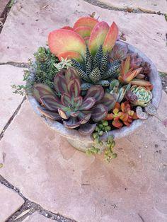 Nice succulent arrangement by Melanie Huff featuring Echeveria nodulosa and Kalanchoe lucia.