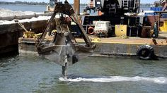 Oyster recovery project