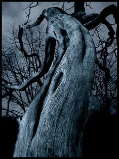 Alistar Jones posted The Dark Tree to his -great photos- postboard via the Juxtapost bookmarklet. Tree Forest, Dark Forest, Spooky Trees, Haunted Tree, Haunted Places, Twisted Tree, Dark Tree, Tree Photography, Nature Tree