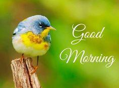 #goodmorning #wednesdaywisdom #wednesday #wednesdaymotivation #happywednesday #wednesdaymorning #GoodMorningWorld
