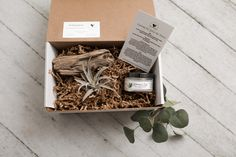 Sprout the gift of giving! Eco-friendly, natural gift boxes for various occasions. Every box includes a succulent or air plant and up to two personal gifts. Air Plants, Gift Boxes, Giving, Sprouts, Personalized Gifts, Succulents, Eco Friendly, Gift Wrapping, Natural