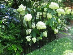 A decorative fence with hydrangea in front of my ugly utility boxes. The fence supports the hydrangea blooms