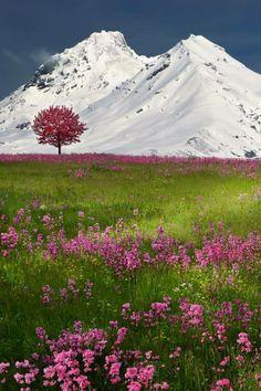Swiss Alps, Brunnen, Switzerland