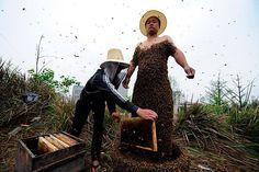 It's a Bee Dress