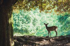 https://flic.kr/p/pjBTgn | 奈良の鹿
