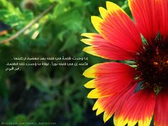 ibn-al-jawzi-quote-darkness-in-your-heart-on-flower