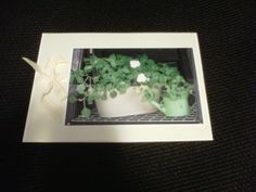 These flowers and planters were in our backyard - another of Norm's photos, and another handmade card using it.