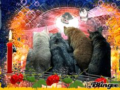 Kittens Cutest, Cute Cats, Sweet Dreams Pictures, Unicorn Wallpaper Cute, Good Morning Sunshine, Animation, Baby Cats, Beautiful Roses, Cat Art