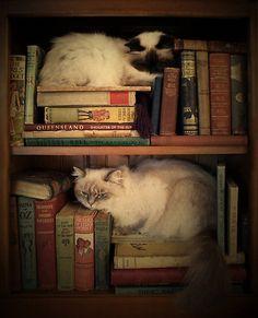 Library Cats by Sarah Mac Repinned by Ellery Adams  www.elleryadamsmysteries.com