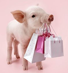 Hot to trotter: The pampered pink piglets who are hogging the limelight
