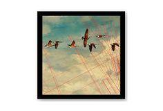Jordan Carlyle, Birds In Flight on OneKingsLane.com