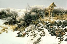 Coyote In Winter Sage by Robert Bateman. See the can? What does it mean to you?
