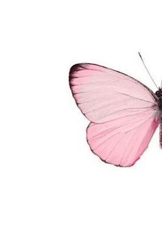 Image shared by The Butterfly. Find images and videos about pink and butterfly on We Heart It - the app to get lost in what you love. Pink Love, Pale Pink, Pretty In Pink, Butterfly Kisses, Pink Butterfly, Mode Poster, I Believe In Pink, Everything Pink, Beautiful Butterflies