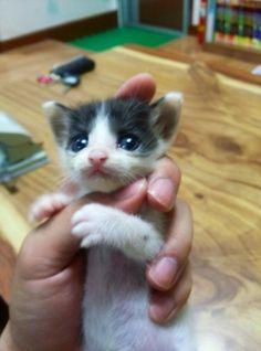 What a dear little kitten!