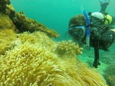 Our forest manager Guillaume is also a diver. Photo from our staff dive trip to Tanikely marine reserve looking for some Madagascar anemone fish. Diving School, Marine Reserves, Diving Course, Padi Diving, Madagascar, Fish, Travel, Animals, Viajes