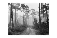 Ansel Adams- Road and Fog, Del Monte Forest, Pebble Beach, California, 1964