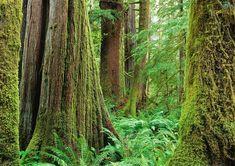 Rainforest on the way to Long Beach, British Columbia, BC