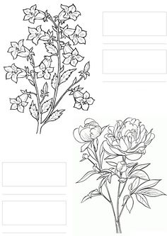 @complicolor copic coloring Printable pages and Coloring books for grown-ups at: http://www.complicatedcoloring.com #flowers #coloring