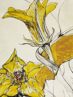 """Now a Daffodil study by Natasha Clutterbuck from Somerset. Delicate pretty and well executed. Natural Form Artists, Natural Forms Gcse, Art Floral, Flower Artists, Nature Artists, Guache, Art Courses, A Level Art, Plant Art"