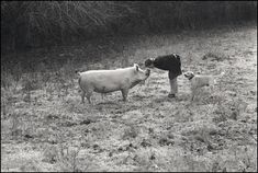 Jamie Wyeth kissing his pet pig Baby Jane photo by Susan Gray
