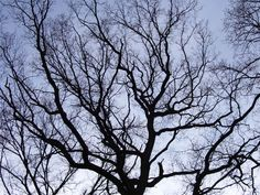 tree branches pictures