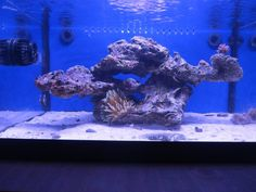 Minimalist Aquascaping - Page 64 - Reef Central Online Community
