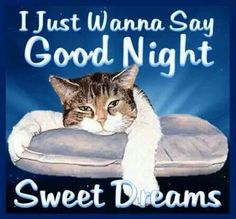 We send good night images to our friends before sleeping at night. If you are also searching for Good Night Images and Good Night Quotes. Good Night Cat, Good Night Thoughts, Good Night I Love You, Good Night Prayer, Good Night Friends, Good Night Blessings, Sweet Night, Good Night Wishes, Good Night Sweet Dreams