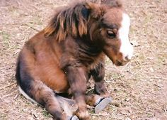 Thumbelina, the Smallest Horse in the World, Steals Hearts Everywhere - Neatorama