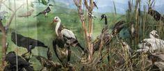 ΟΡΝΙΘΟΛΟΓΙΑ Natural History, Bald Eagle, Bird, Nature, Animals, Naturaleza, Animales, Animaux, Birds