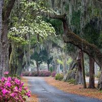 City : Savannah Georgia - Oaks And Azaleas Lining Rural Road Great Places, Beautiful Places, Places To Visit, Beautiful Scenery, Romantic Places, Amazing Places, Amazing Art, Awesome, Savannah Georgia