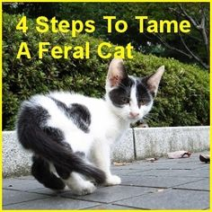 4 Steps To Tame A Feral Cat  ... from PetsLady.com ... The FUN site for Animal Lovers