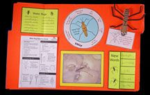 Water Strider Lapbook