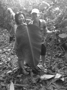 One of the many huge leaves that are found in our private jungle here in #costarica @Villas de San Buenas Costa Rica