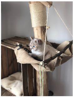 Spezialanfertigungen, dein Kratzbaum, auch für große Katzen - Naturholzbäume für Katzen Diy Cat Tree, Cat Trees, Living With Cats, Cat Room, Some Body, Thor, Ladder Decor, Rooster, Pets