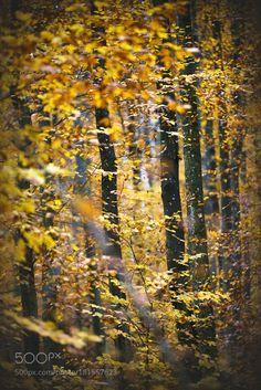 Autumn glory by chris-herzog
