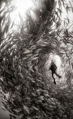 Alice Photo by Anuar Patjane — National Geographic Your Shot - Surrounded by a swarm of jack fish in Cabo Pulmo National Park, Mexico. Cabo Pulmo is the best example of a recovered reef in Mexican seas. Under The Water, Fishing Photography, Underwater Photography, Nature Photography, Film Photography, Street Photography, Landscape Photography, Travel Photography, Pregnancy Photography