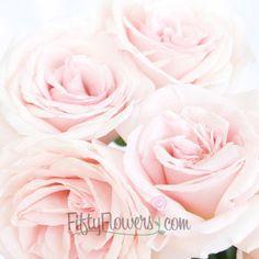 FiftyFlowers.com - Garden Rose Powder Pink
