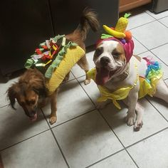 Please tell me I'm not the only one who finds enjoyment in having my fur kids dress up for halloween!!