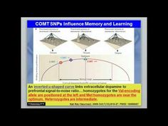 Treating COMT and MAO: How COMT Influences the Brain | Beyond MTHFR | Optimizing Genes, Changing Lives
