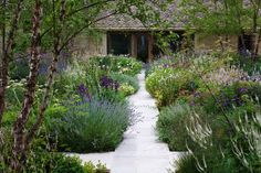 Marcus Barnett Studio are based in west London and they specialise in Garden & Landscape Design. Back Gardens, Small Gardens, Outdoor Gardens, House Landscape, Landscape Design, English Garden Design, Parcs, Front Yard Landscaping, Garden Styles