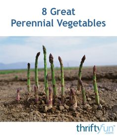 Despite the wait, often a year, before they produce their first crop there are many advantages to planting perennial vegetables. Some good choices include, artichokes, asparagus, chayote, rhubarb, and more. This is a guide contains information about eight great perennial vegetables.