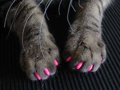Soft claws nail caps are an 'attractive' and humane alternative to declawing your cat. Developed by a veterinarian, Soft Claws are vinyl nail caps that glue on to your cat's claws. The nail caps cover the claw tips so no damage occurs when your cat scratches. One package contains enough nail caps for 4 applications on Kitty's front paws. Each application lasts approximately 4-6 weeks. Soft Claws come in Kitten, Small, Medium, and Large sizes, and in Natural, Purple, Pink, Blue, and Red color...