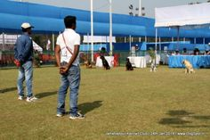 Jamshedpur Obedience Dog Show 2014