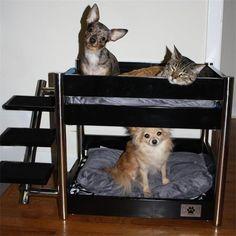 Hund och katt i våningssäng