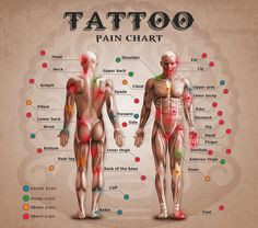 Tattoo Pain Chart just estimated. Doesn't mean it will be that for you