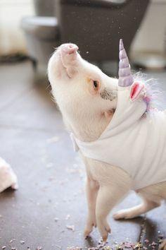 Piggie unicorn (Ein Schweinhorn <3)