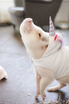 Cute Piggy in a Unicorn Costume ♡♡♡