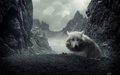 Animalia - Lobo  - Beautiful - Overcast - Montañas - Animalia Fondo de Pantalla