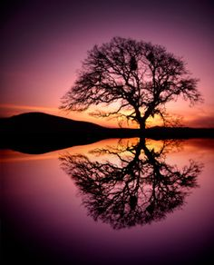 tree reflection,makes me think of Lion King :)